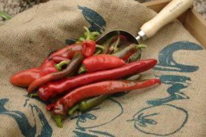 harvested_chillies