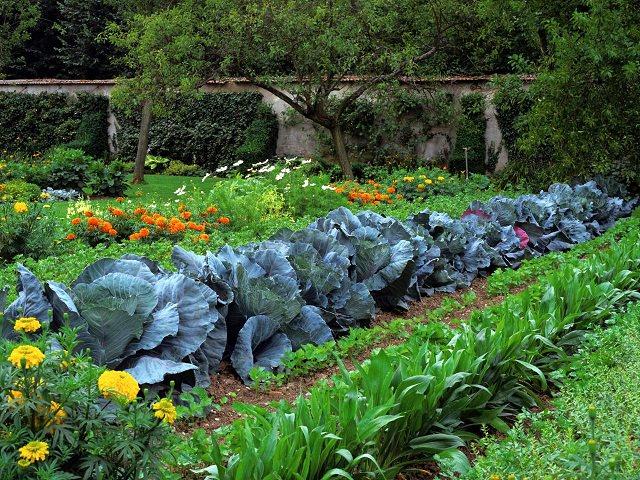 Secret-to-a-Continuous-Productive-Garden