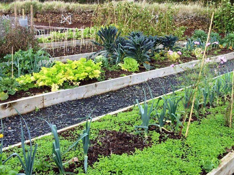 open-garden