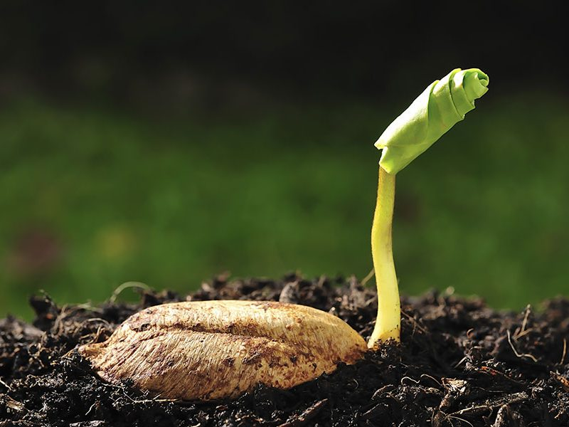 seed-sprouting