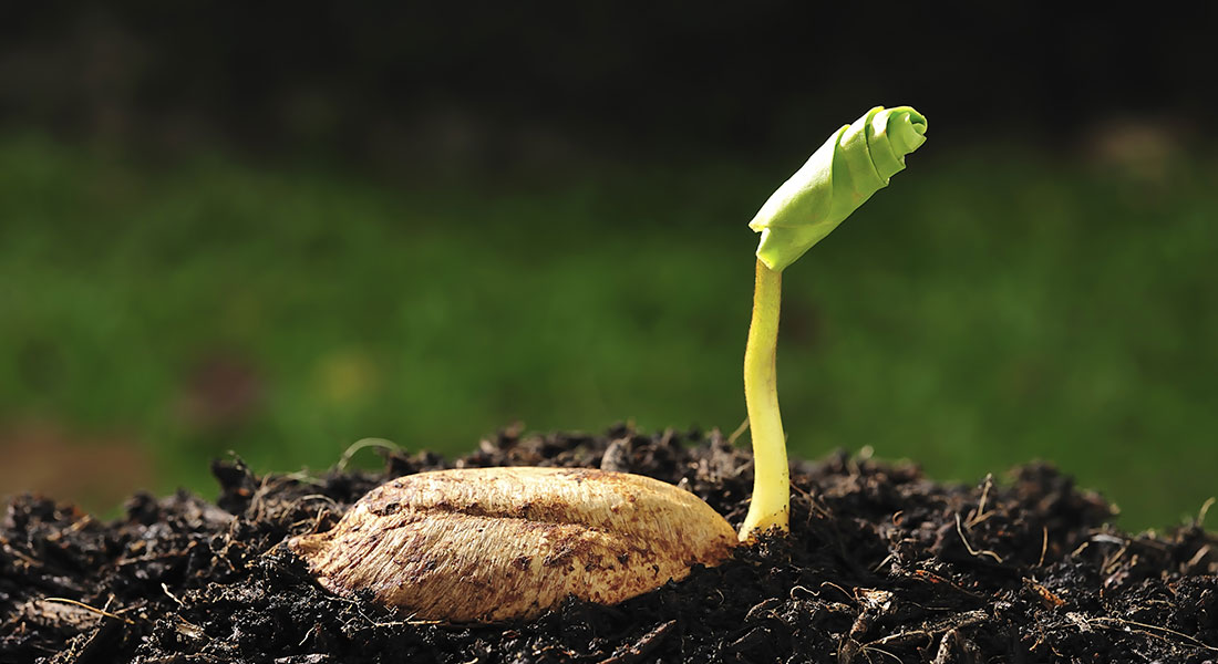 seed-sprouting.jpg